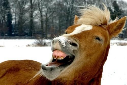 cavallo_nitrito.jpg