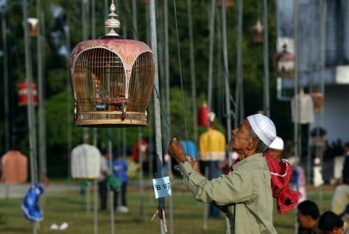 festival_uccelli3.jpg