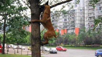 cane_arrampicata-alberi1.jpg