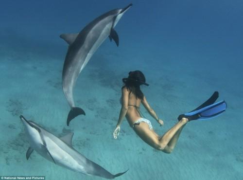 notizie animali, notizie divertenti, notizie strane, notizie commoventi, delfini, cetacei, danza con i delfini, Dolphin Dance Project
