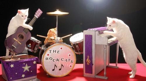 notizie animali, notizie divertenti, notizie strane, notizie commoventi, gatti, felini, Rock Cats, gatti musicisti gatti e rock band, Acro-Cats