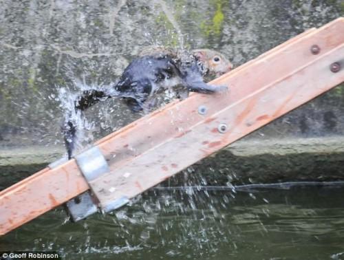 notizie animali, notizie divertenti, notizie strane, notizie commoventi, scoiattoli, roditori, piccoli mammiferi, animali in pericolo