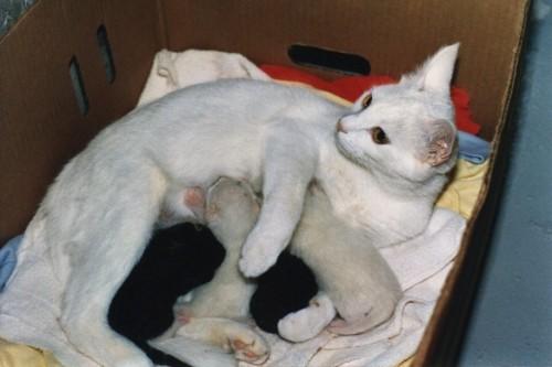 cagna-gatta_cuccioli2.jpg