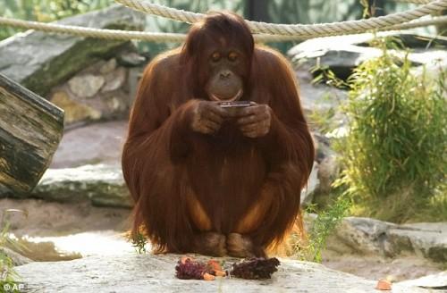 orangotango_foto1.jpg