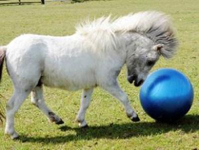 pony_calcio3.jpg