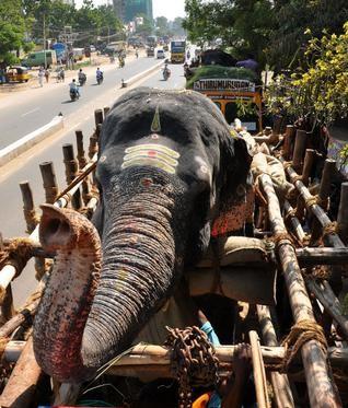 notizie animali, notizie divertenti, notizie strane, notizie commoventi, elefanti dei templi, templi indiani, elefanti in vacanza, benedizione degli elefanti