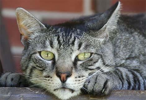 gatto_viaggio-padroni1.jpg