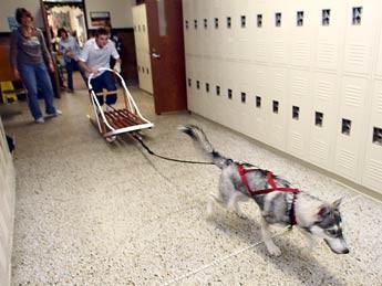 cane-slitta_scuola2.jpg