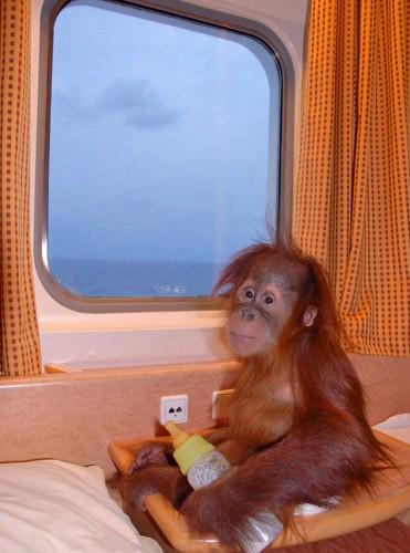 scimmia_crociera5.jpg