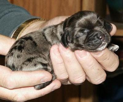 Un Idraulico Ha Salvato Un Cucciolo Finito In Uno Scarico L