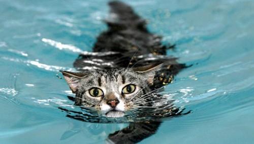 notizie animali, notizie divertenti, notizie strane, notizie commoventi, paralisi gatti, idroterapia per gatti, idroterapia per animali