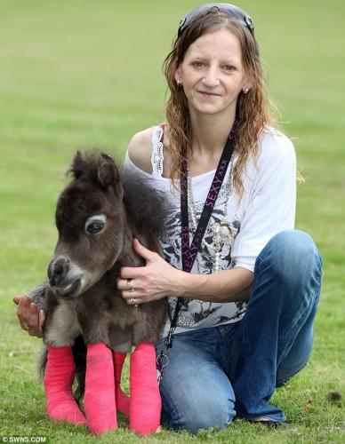 notizie animali, notizie divertenti, notizie strane, notizie commoventi, pony Falabella, cavalli in miniatura, pony malformati