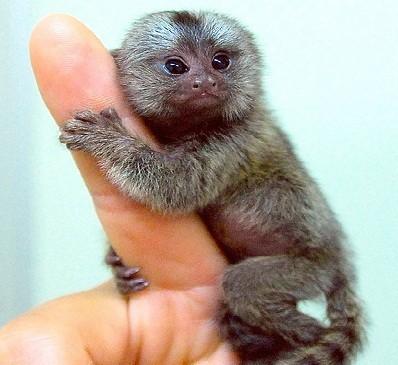 scimmia_reggiseno2.jpg