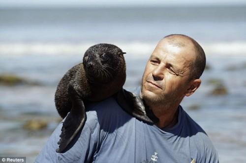 notizie animali, notizie divertenti, notizie strane, notizie commoventi, leoni marini, cuccioli di leoni marini, cuccioli orfani, cuccioli salvati, animali marini, pinnipedi
