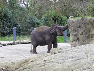 notizie animali, notizie divertenti, notizie strane, notizie commoventi, elefanti, elefante indagatoPresunto colpevole  La polizia coreana sta investigando su Taesani, un elefante fortemente sospettato di lanciare pietre sui visitatori dello zoo che lo ospita.