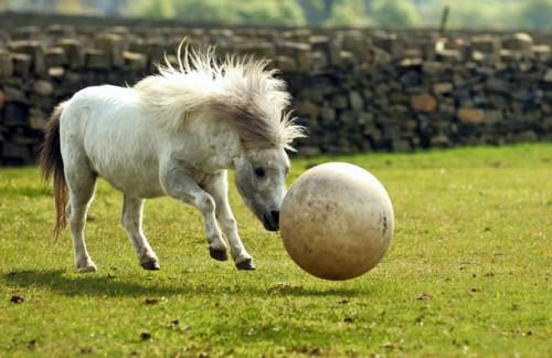 pony_calcio2.jpg