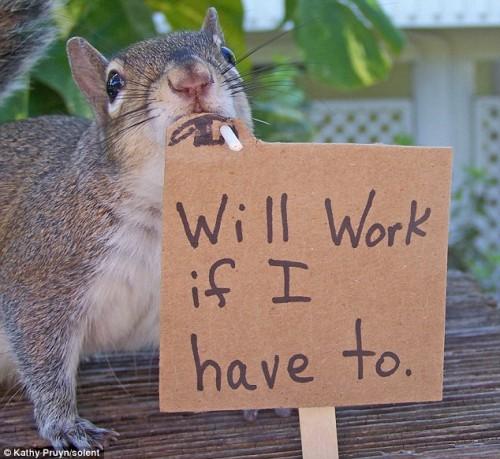 notizie animali, notizie divertenti, notizie strane, notizie commoventi, scoiattoli arachidi, burro di arachidi, Barbie, scoiattoli fotografati