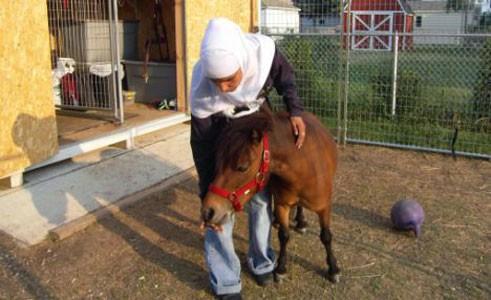pony_guida3.jpg