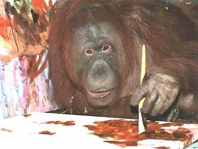 orangotango_foto3.jpg