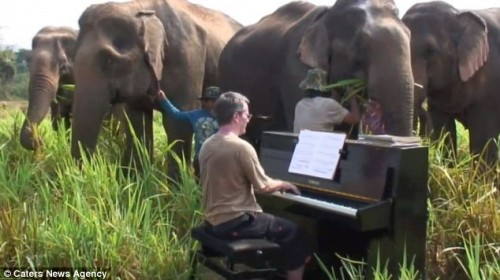 elefanti_piano1.jpg