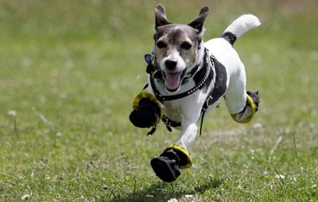 notizie animali, notizie divertenti, notizie strane, notizie commoventi, celebrity dogs, celebrity pets, cani celebri, cani di attori, cani, allergie cani, allergie zampe, allergie erba, stivali per cani