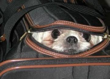 cani in treno: c'è ancora speranza   l'arresto del carlino