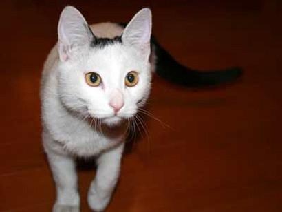 gatto_nome1.jpg