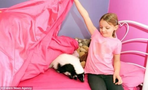 notizie animali, notizie divertenti, notizie strane, notizie commoventi, puzzole, moffette, pet therapy, animali terapeutici