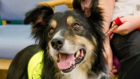 notizie animali, notizie divertenti, notizie strane, notizie commoventi, cani, cani da terapia, cani terapeutici, therapy dog, therapy pet