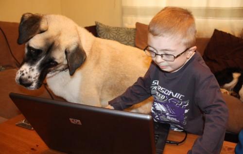 notizie animali, notizie divertenti, notizie commoventi, notizie strane, cani, therapy dog, pastori dell'Anatolia, cani a tre zampe, cani disabili