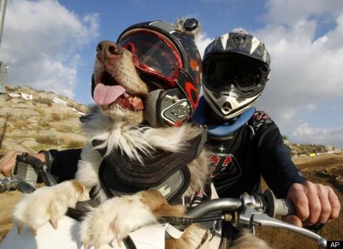 cane_motocross1.jpg