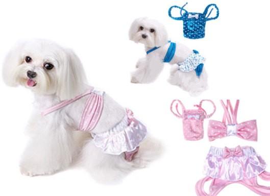 Costumi da bagno per cani l arresto del carlino