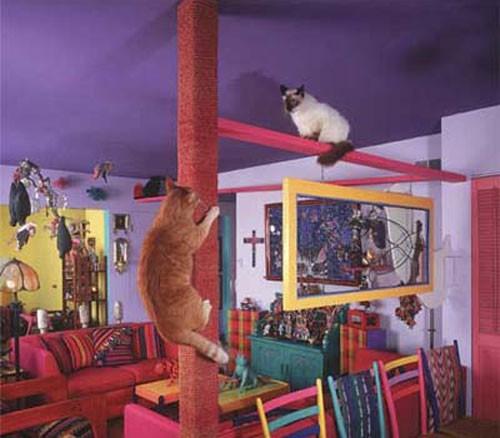 casa_gatti2.jpg