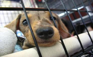 notizie animali, notizie divertenti, notizie strane, notizie commoventi, cuccioli malati, cuccioli in ospedale