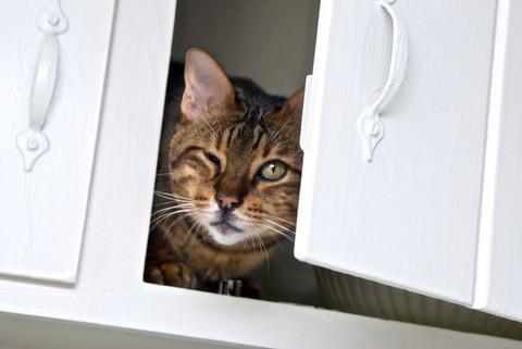 notizie animali,notizie divertenti,notizie strane,notizie commoventi,gatti,gatto ladro,gatto denunciato