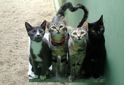 Tolmezzo: l'Ass sterilizza i gatti per 5 anni in cambio di due posti auto