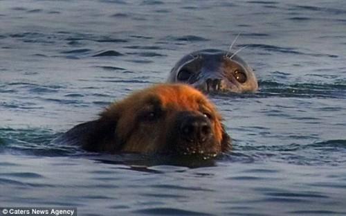 notizie animali, notizie divertenti, notizie strane, notizie commoventi, cani, foche