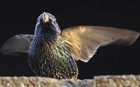 uccello_film2.jpg