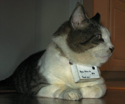 gatto_camera-spiona.JPG