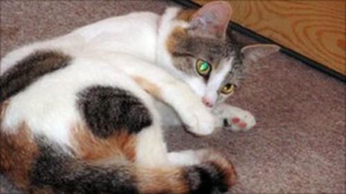 gatto_epilessia1.jpg