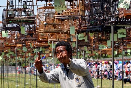 festival_uccelli4.jpg