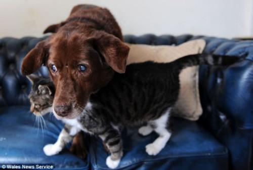 notizie animali, notizie divertenti, notizie strane, notizie commoventi, cani gatti, animali ciechi, animali guida, cane cieco, gatto-guida