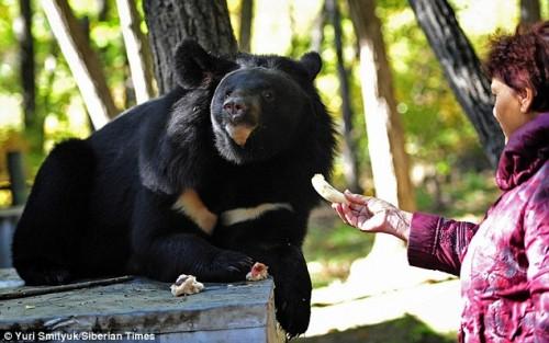 notizie animali, notizie divertenti, notizie strane, notizie commoventi, orsi, animali adottati, rifugi per animali selvaggi, orsi adottati