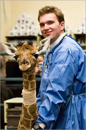 giraffa_Molly4.jpg