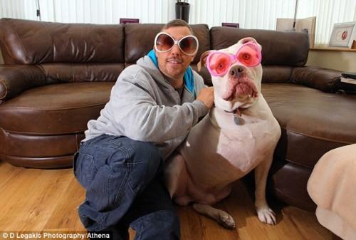notizie animali, notizie divertenti, notizie strane, notizie commoventi, cani, bulldog americano, viaggio di nozze, luna di miele, cani malati, cancro dei cani
