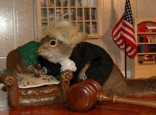 notizie animali, notizie divertenti, notizie strane, notizie commoventi, scoiattoli, roditori, animali modelli