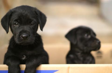 notizie animali, notizie divertenti, notizie strane, notizie commoventi, cani, cuccioli, pet therapy, animali anti-stress