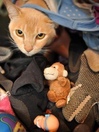 gatto_ladro1.jpg