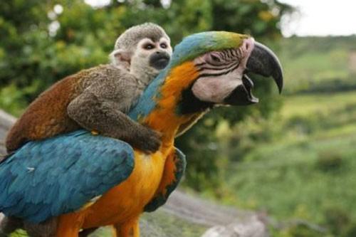 scimmia_pappagalli1.jpg