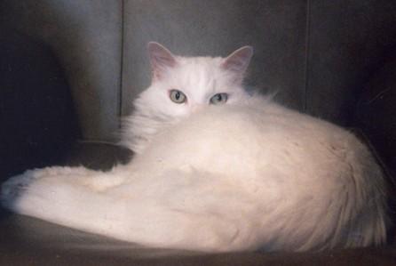 gatto_parlante1.jpg
